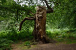 DSC 0105 Running Tree 1 by wintersmagicstock