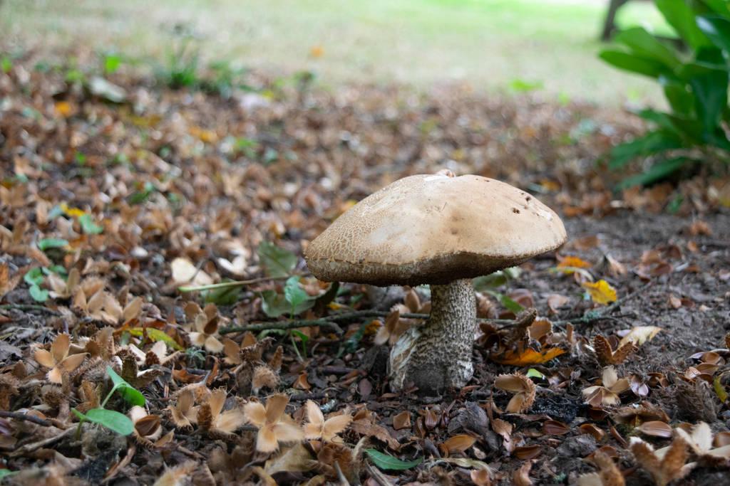 DSC 1075 Fungi 5 by wintersmagicstock