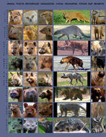 Animal Refs: Mongoose and more by AddictionHalfWay