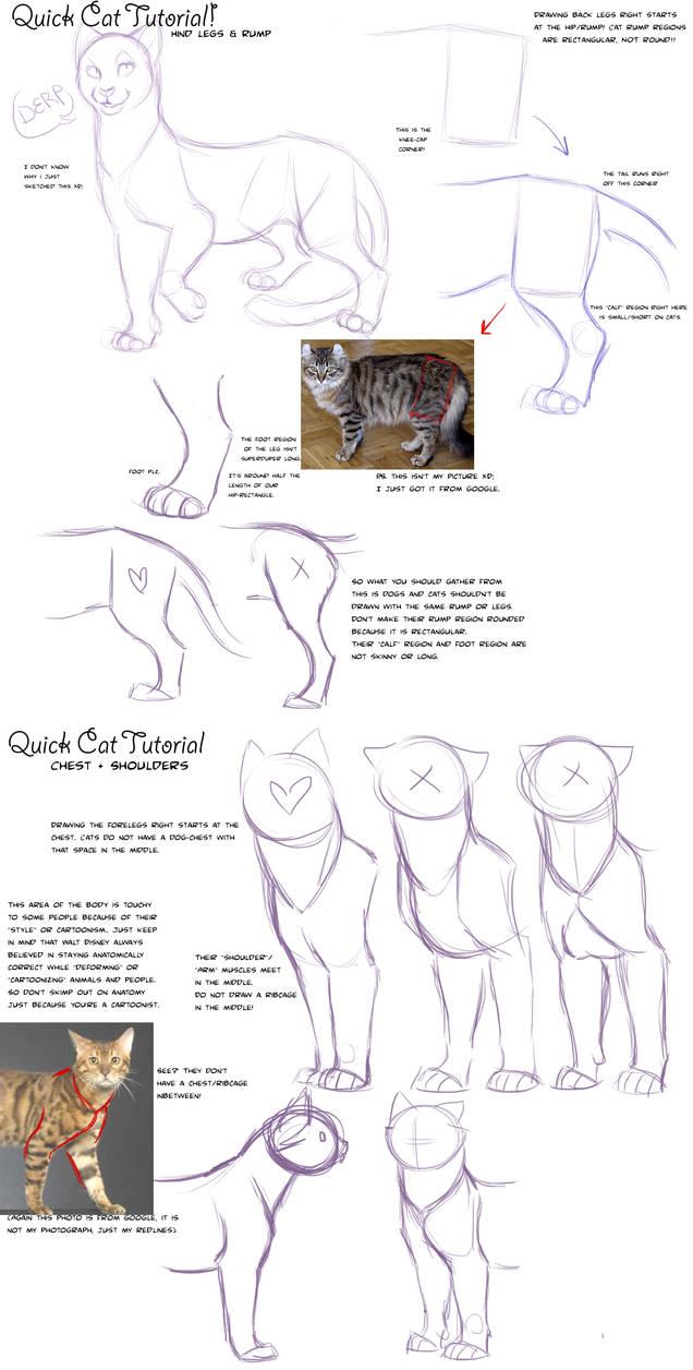 Quick Cat Anatomy Tutorial By Addictionhalfway On Deviantart