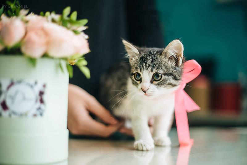 Kitten and flowers by Ersaniel