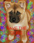 SAVE THE DOGS by mericanmussolini