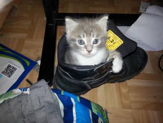 goodbye kitty.... by LightDelablue