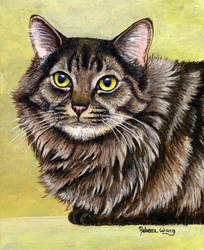 Pet Portrait - Achilles Maine Coon Cat by rebeccawangart