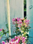 Flower and Fence v2 by barefootphotos
