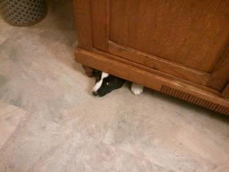 hiding by stone-pegasus