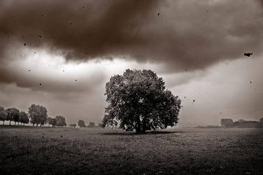 In from the storm by LutherBash