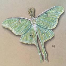 Luna Moth // colored pencil by MajesticPaula