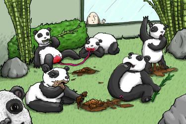 Panda Inbreeding Program by eightman