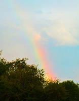 rainbow by GregoriusU