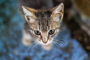 Lost Kitten by weelx