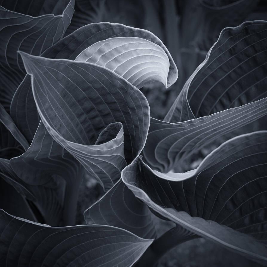 Leaves V by MatsHolmberg