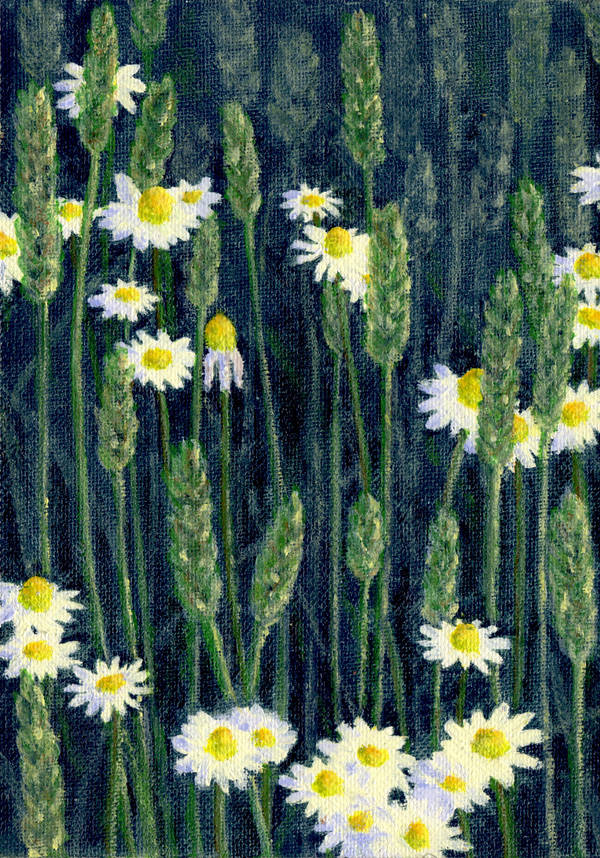 Camomile in a wheat field by KarinM