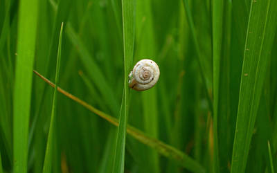 Snail in the grass by vladimir0523