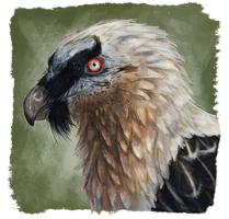 Bearded vulture by RiverRaven