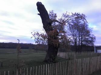 An interesting tree by Tinybr