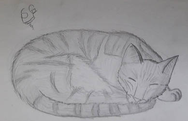 Sleeping Cat  by SelecterGamer