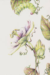 Caterpillar and Passionfruit Flower by Listenes