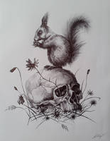 Squirrel on the skull by Foxytragic