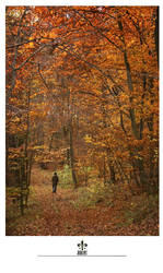 autumn colours by rob-art