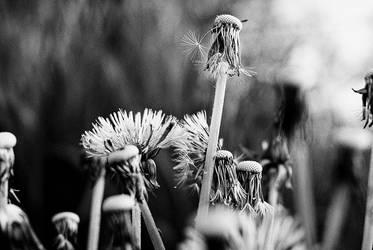 Meadow Landscape by CanisLupusMoon