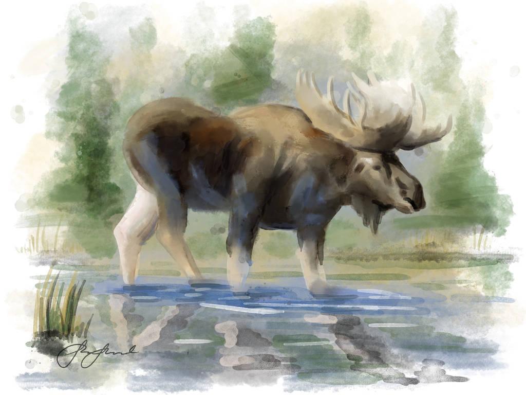 Moose i jamtland by Viking011