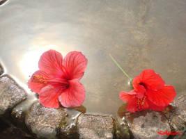 flowers by missfear666