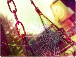 Colourful Web. by ToniTurtle