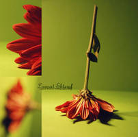 Flower 01 by Lamsat-Ehteraf