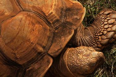 Rusty Tortoise by rslewisphotos