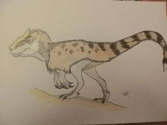 Southern allosaurus... Or not? by Kazuma27