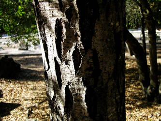Tree by Before-I-Sleep