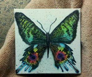 Chrysiridia rhipheus or Madagascan Sunset Moth by Kellywatchthestars