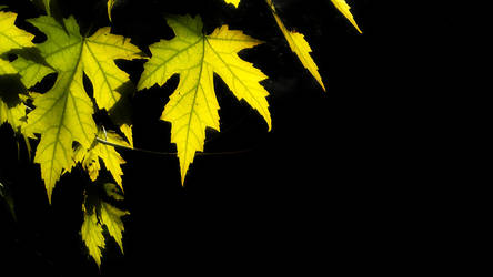 Autumn wallpaper by reydy1241016080076