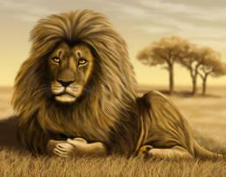 Lion by ravenscar45