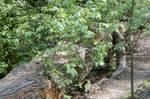 Fallen Tree by ravenscar45