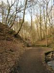 Woodland Path by ravenscar45