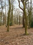 Autumn Woodland by ravenscar45