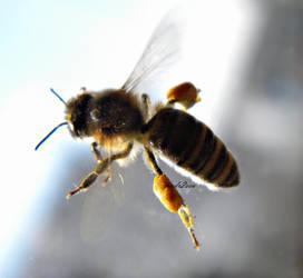 little bee by andr2eea