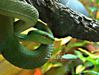 green snake by andr2eea