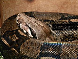 sleepy snake by andr2eea