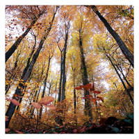 Fall dots by Al-Baum