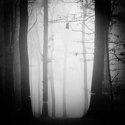 November mist by Al-Baum