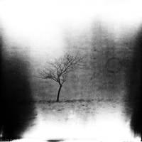 Land 16 by Al-Baum