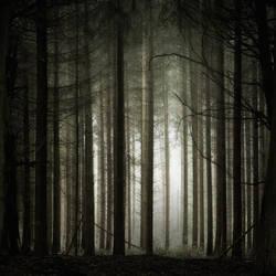 Apres la nuit by Al-Baum
