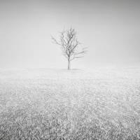 Givre by Al-Baum