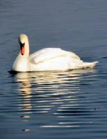 Swan by Biljana1313