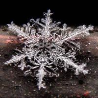 -Snowflake- by Biljana1313