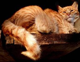 Sleepy Pucko by Biljana1313