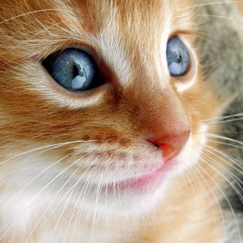 When I was a little kitten by Biljana1313